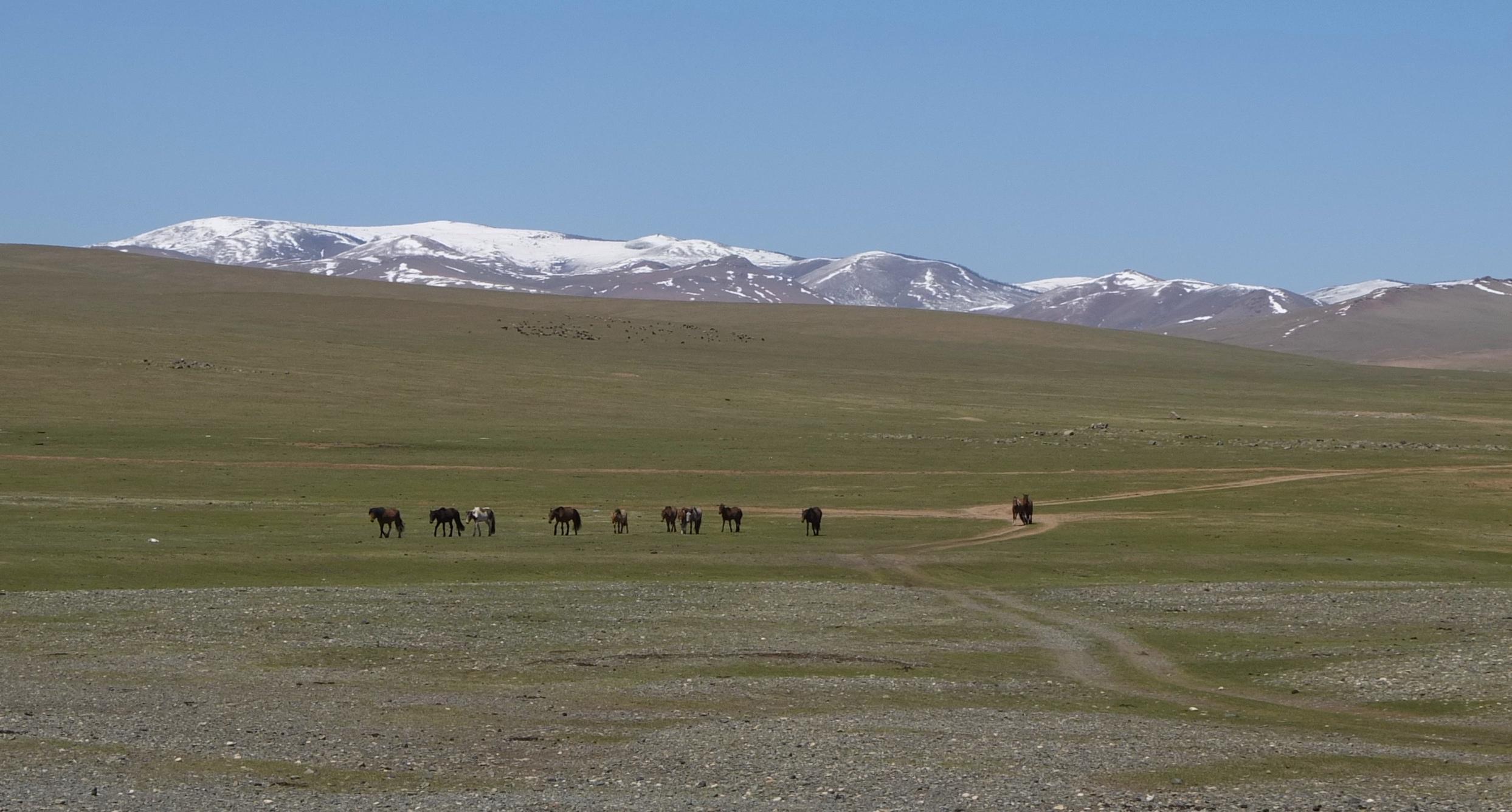 Anal Girl in Ulaangom