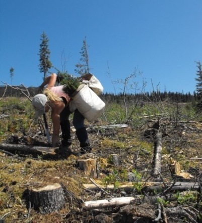 planting-canada-08-1